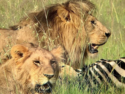 Нгоронгоро сафари 1 день