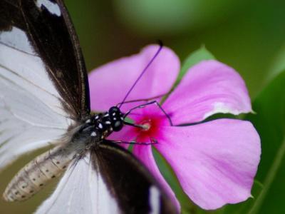 Бабочки + Лес Джозани
