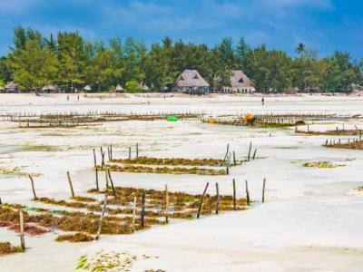 Деревня Джамбиани, выращивание водорослей